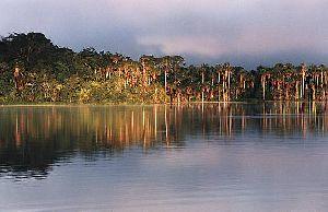 Lake Sandoval / Canopy