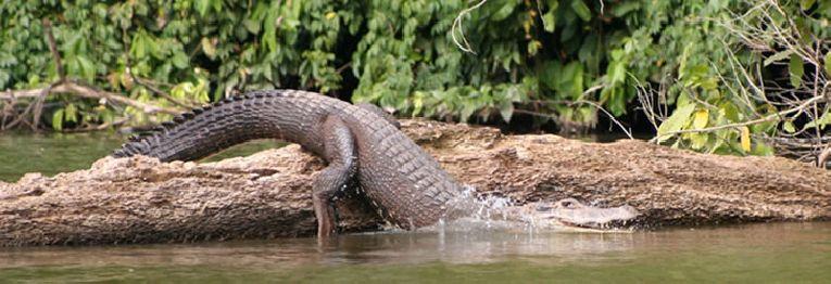 Manu National Park - Reserved Zone (08 days)