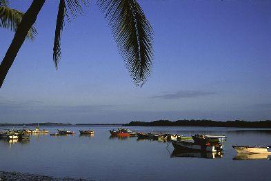Puerto Pizarro Mangroves