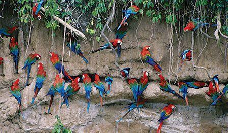 Manu National Park - Reserved Zone