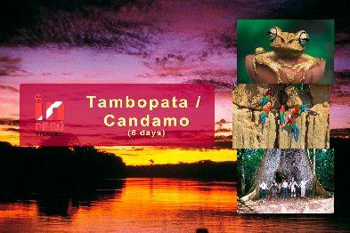 Tambopata / Candamo